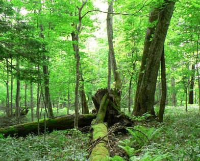 ブログ  話森林