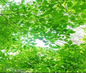 自然学究塾2016 ●自然探究講座