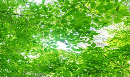 自然学究塾2016